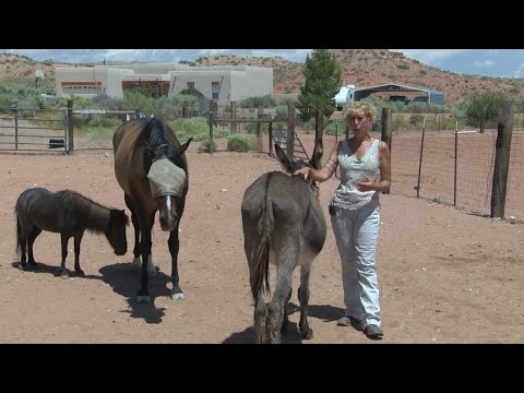 Woman aims to open foal rescue facility