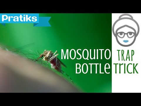 Household remedy for catching mosquitoes