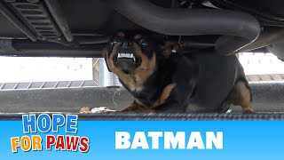 Homeless Batman lived under his Batmobile until Hope For Paws came to his rescue.