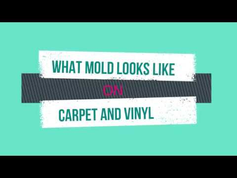 What Mold Looks Like on Carpet and Flooring