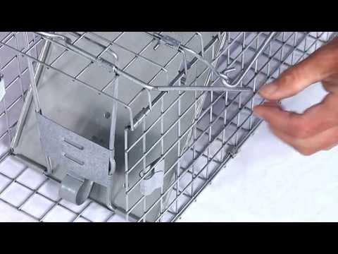 How to Set: Havahart® Medium Collapsible 1-Door Trap Model #1088 for Rabbits & Skunks