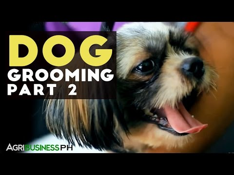 How to clean your dogs ear, cut nails and brush teeth of your dog : Dog grooming Part 2