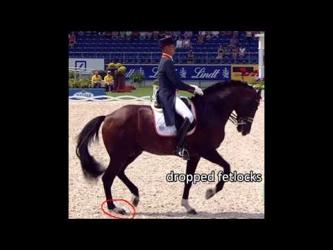 Horses in Handstand - Spectacular Gaits versus Health Part II