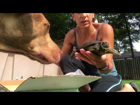 Unboxing European pond turtles from the Turtleman in LA