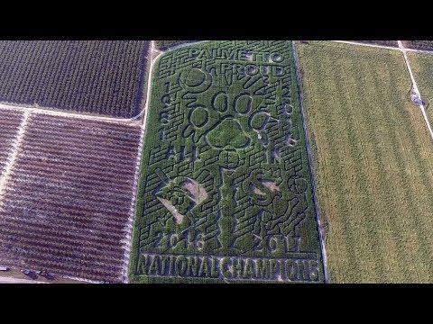 Making It Grow - McLeod Farm's Palmetto Proud Corn Maze