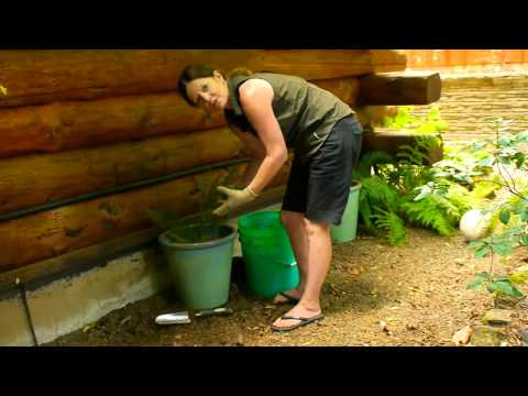 How to Successfully Transplant a Fern From the Ground to a Pot