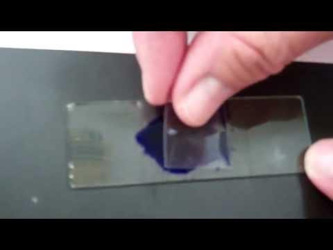 Cheek Cell Video