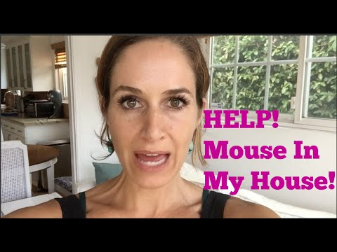 Dead Mouse in my House!
