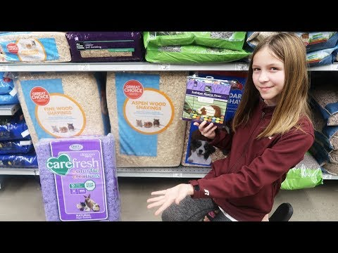 Guinea Pig Bedding | What should I use?