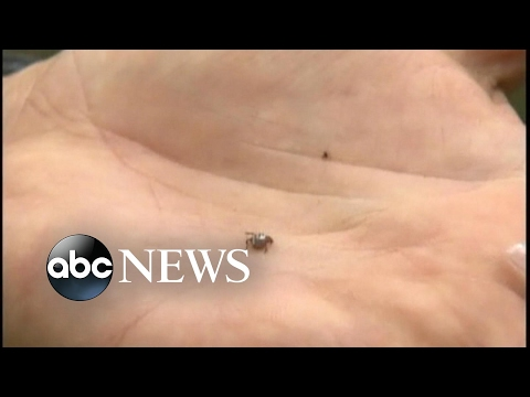 Are seed ticks putting your family in danger?