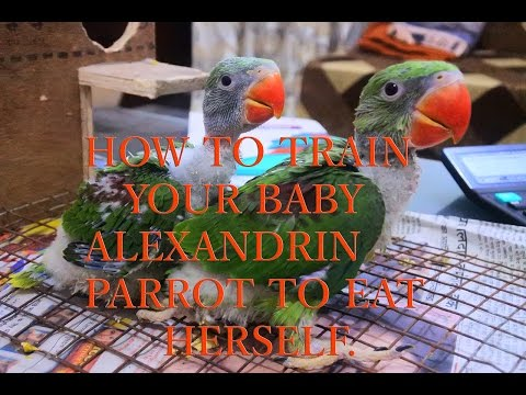 HOW TO TRAIN BABY ALEXANDRIN TO EAT HERSELF - WITH UPDATE