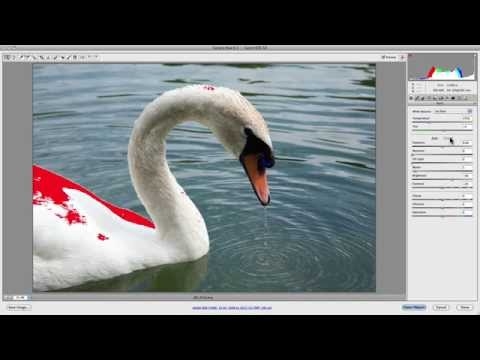Camera Raw Histogram: How To Accurately Edit & Process Images