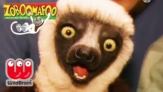 Zoboomafoo | Full Episode: PlayTime | Animals For Kids