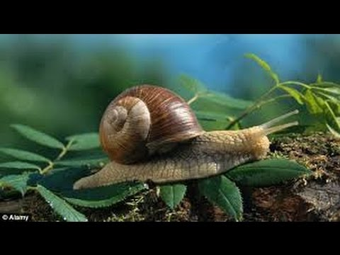 The Expert's Guide to Finding Snails