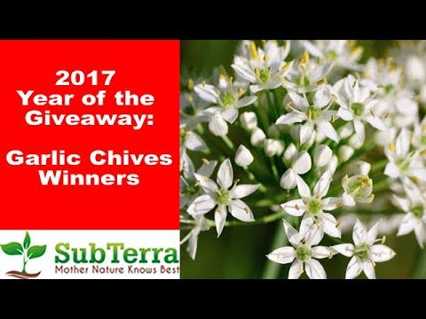 October Garlic Chives Winners