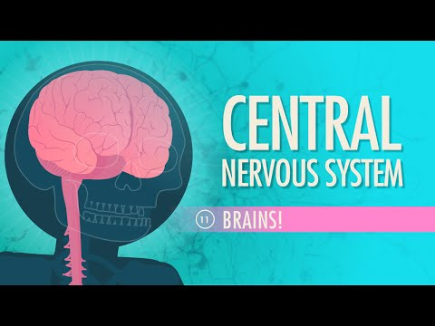 Central Nervous System: Crash Course A&P #11