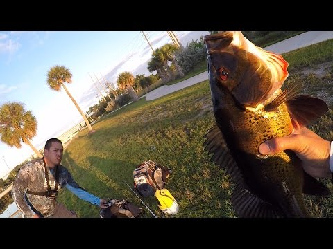 Peacock Bass and Gar on Poppers/Shiners - Florida Canal Fishing