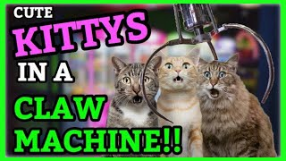 CUTE PET KITTYS IN A CLAW MACHINE!! (Arcade Wins) | ClawBoss
