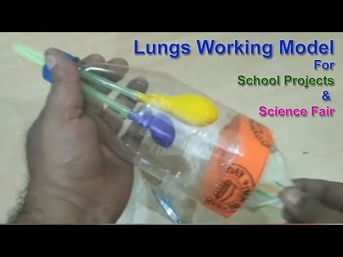 WORKING Model of the lungs   Science Project Lungs Model   Lungs Model for Science Fair