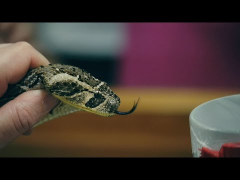 Why snakes and people should mix, featuring Dr Nick Casewell