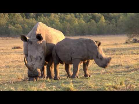 New MTN project to combat rhino poaching