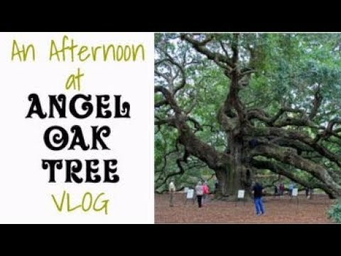 VLOG: Come With Me to the Angel Oak Tree