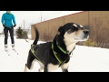 Download Winter sport 'skijoring' combines dogs and skiing In Mp4 3Gp Full HD Video