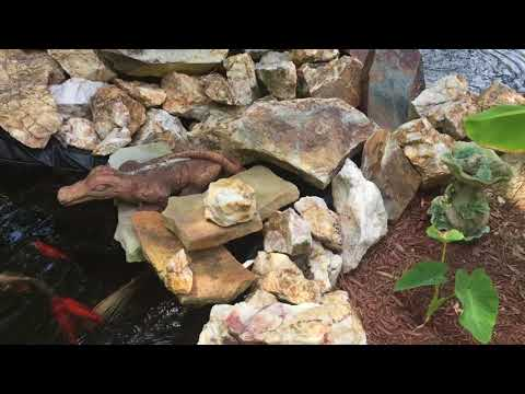 How to Keep a Backyard Fish Pond Clean