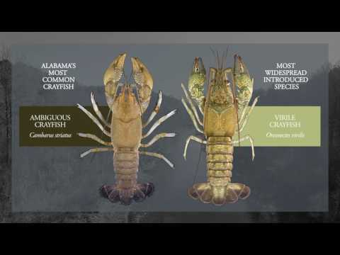 Crayfish of Alabama Poster Now Available!