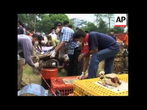 Thousands of chickens and pet birds destroyed to halt spread of bird flu