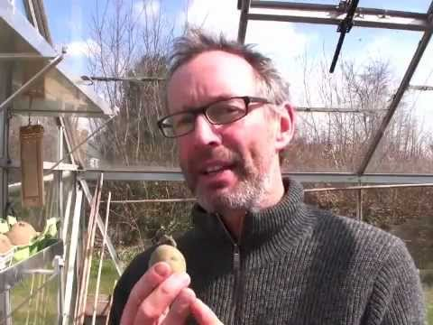 Early April on Peter's Plot: Getting Vegetable Seeds Off to a Flying Start!