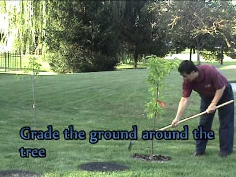 EnviroGarden Rubber Tree Ring