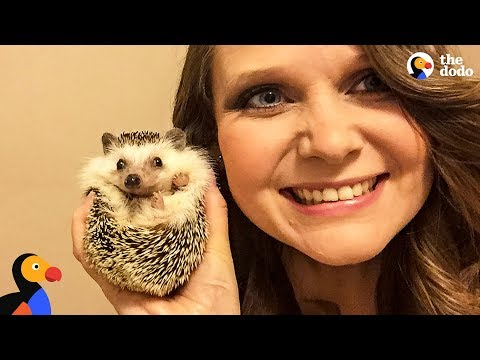 Hedgehog And Mom Are Perfect For One Another - WALDO | The Dodo