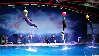 Best of the Dubai Dolphin Show 2017 HD