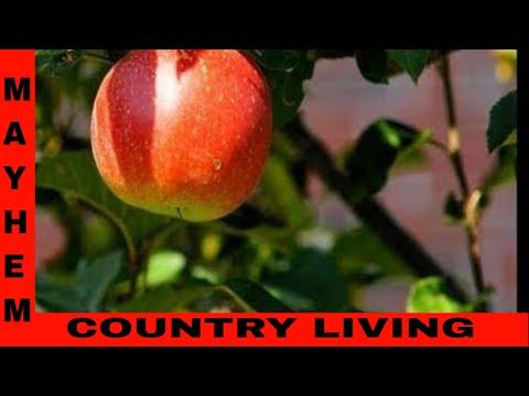 Damn Apple Trees