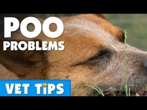 How To Help Your Dog Overcome Constipation | Bondi Vet