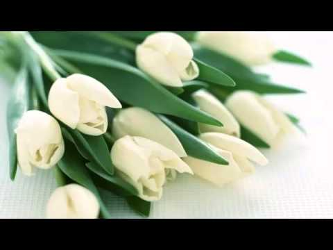 White Tulips Bouquet | Picture Set Of Beautiful Folwers