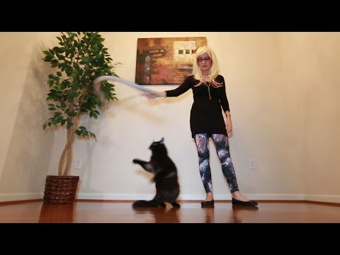 Playtime Tips and Tricks with Your Cat