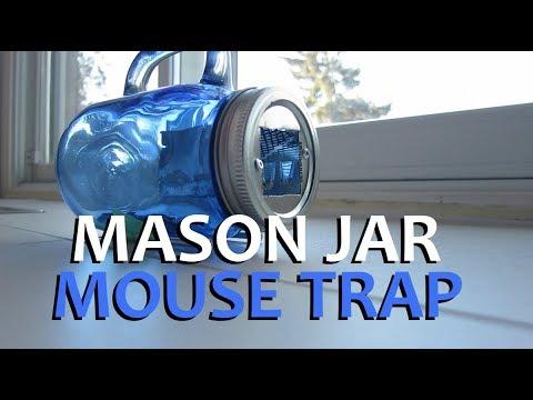 MASON JAR (LIVE) mouse trap- success everytime!