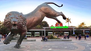 San Diego Zoo - Exploring The Number 1 Rated Zoo In The World - From Pandas To Polar Bears and MORE