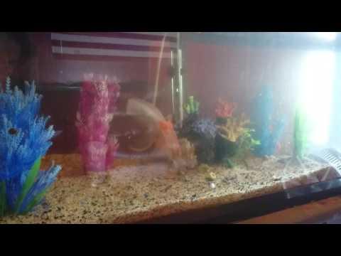 Keeping a Goldfish Tank Clean