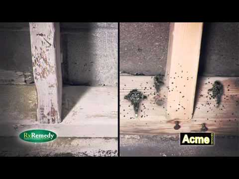 Effects of Mould on Drywall