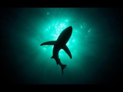 13 Shark Facts