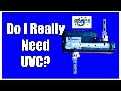 Do I Really Need a Aquarium UV Sterilizer?