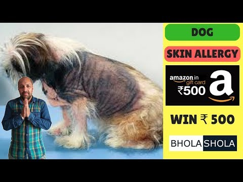 Pet Care - Skin Allergy For Dog ( Canine Atopic Dermatitis ) - Bhola Shola