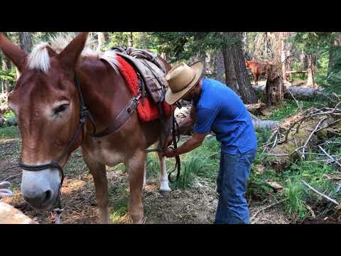 How to saddle a decker pack saddle part 1