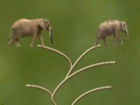 The Asian Elephant - Two Species