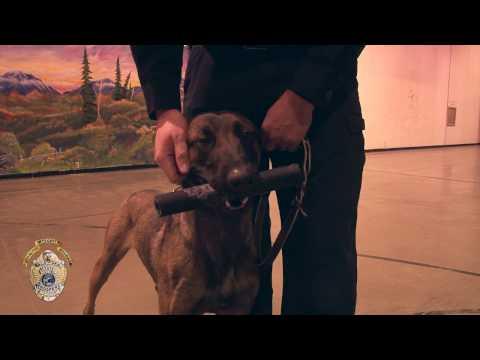 K 9 Drug Dog Training March 2017