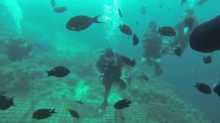 #x202b;أحلى غوصه مع السمك#x202c;lrm;
