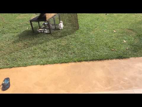 World record jumping rabbit
